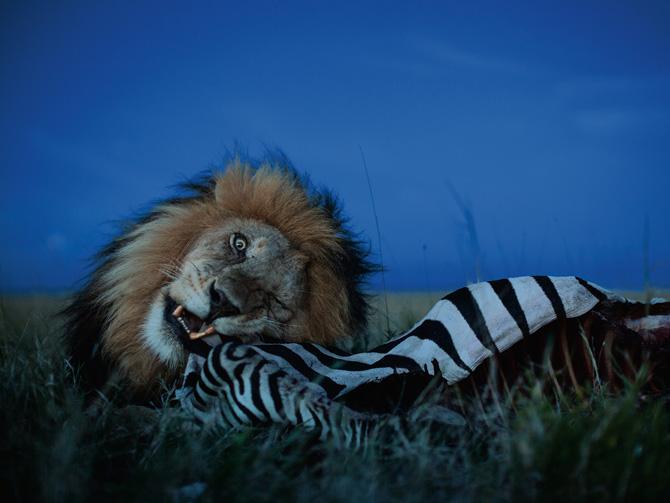 19-cboy-zebra-feast-670